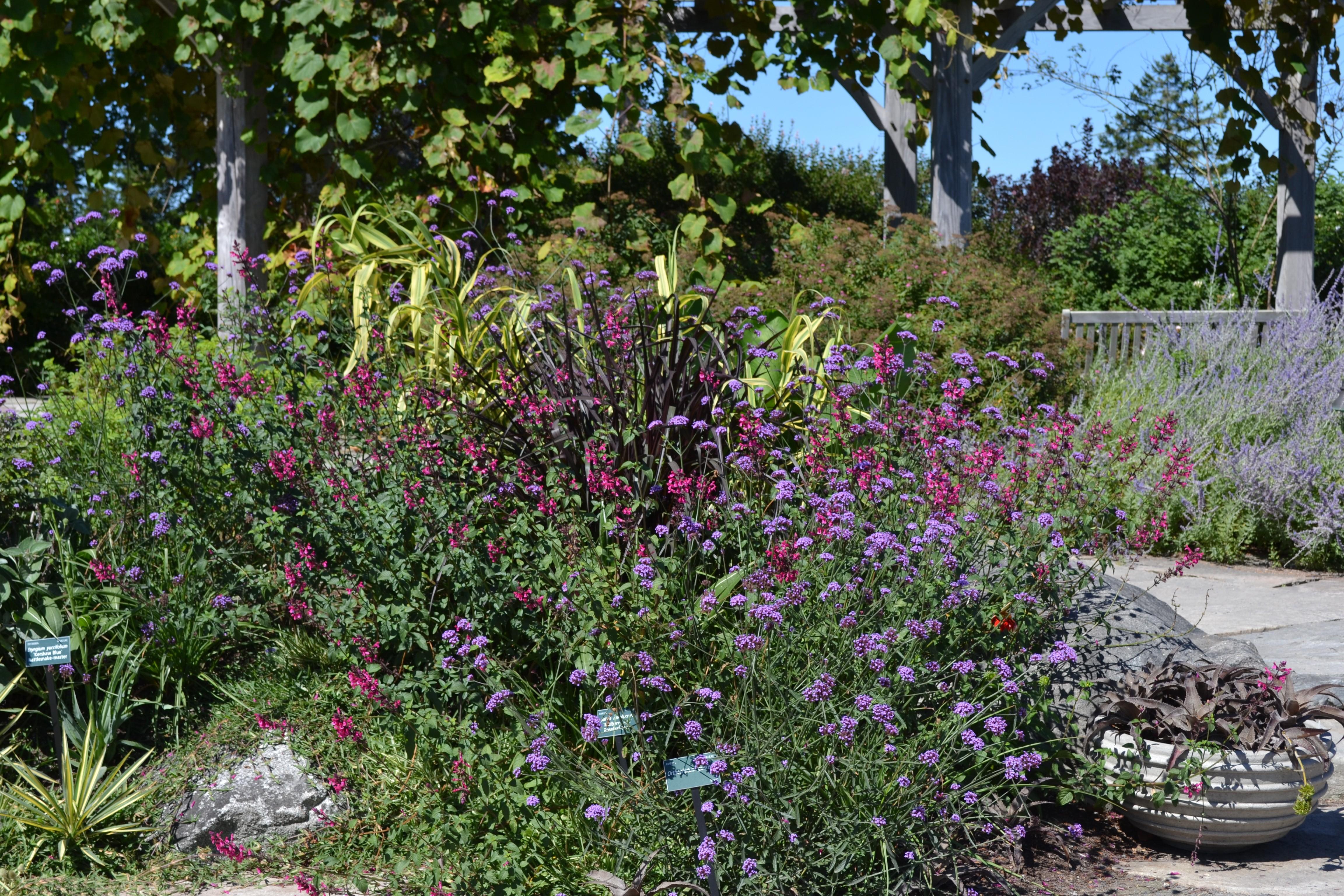 Coastal Maine Botanical Gardens Hidden Hills Garden