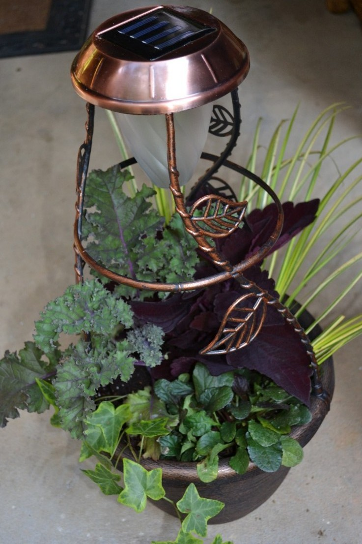 Solaradiance planter, Fall container, Redbor kale, Marooned coleus, sweet flag, Gold Child ivy, aguja