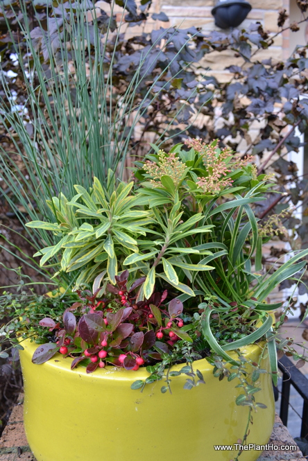 Evergreen winter container
