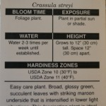 Crassula, Information about growing