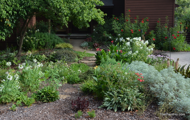 The Plant Ho's Garden