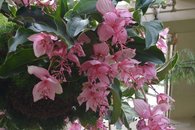 Longwood Gardens, Conservatory