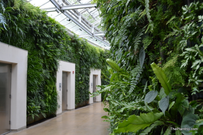 Longwood Gardens, Living wall, Bathroom