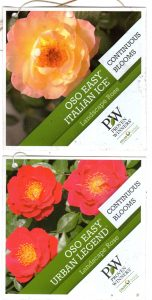 Landscape roses, Proven Winners