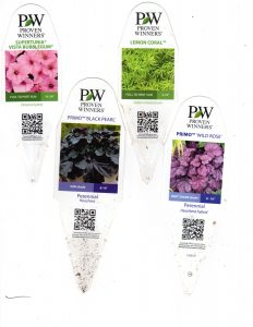 PW Plants